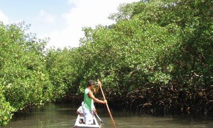 Exploração de ostras no litoral paranaense