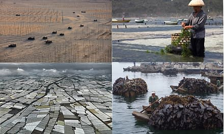 A maricultura na China