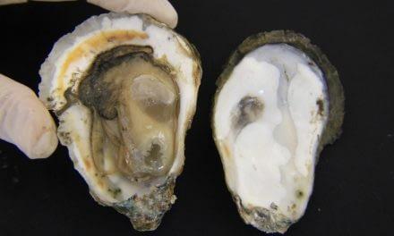 Profilaxia na Ostreicultura