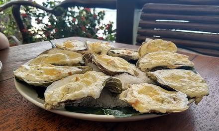 Cultivo orgânico de camarões e ostras no Nordeste Brasileiro