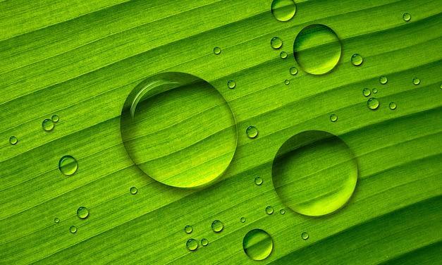 Agricultura familiar urbana e periurbana: fomento à irrigação e à sustentabilidade das pequenas propriedades.
