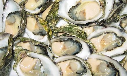 Exploração dos bancos naturais de ostras por comunidades ribeirinhas