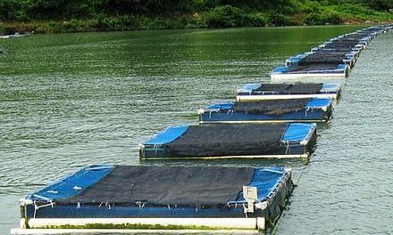 Artigo aborda o programa brasileiro de aquicultura em parques aquícolas.