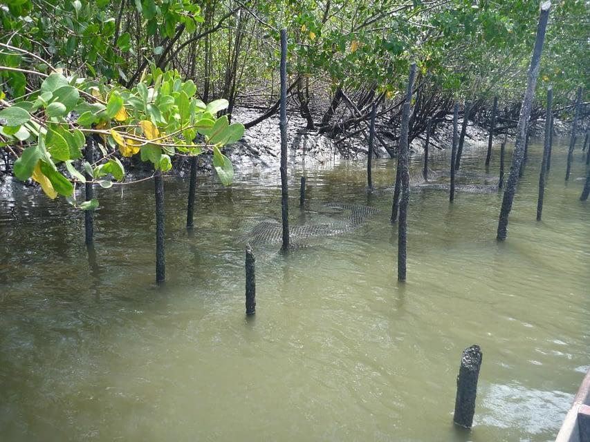 Influência da salinidade da água sobre o cultivo de ostras nativas