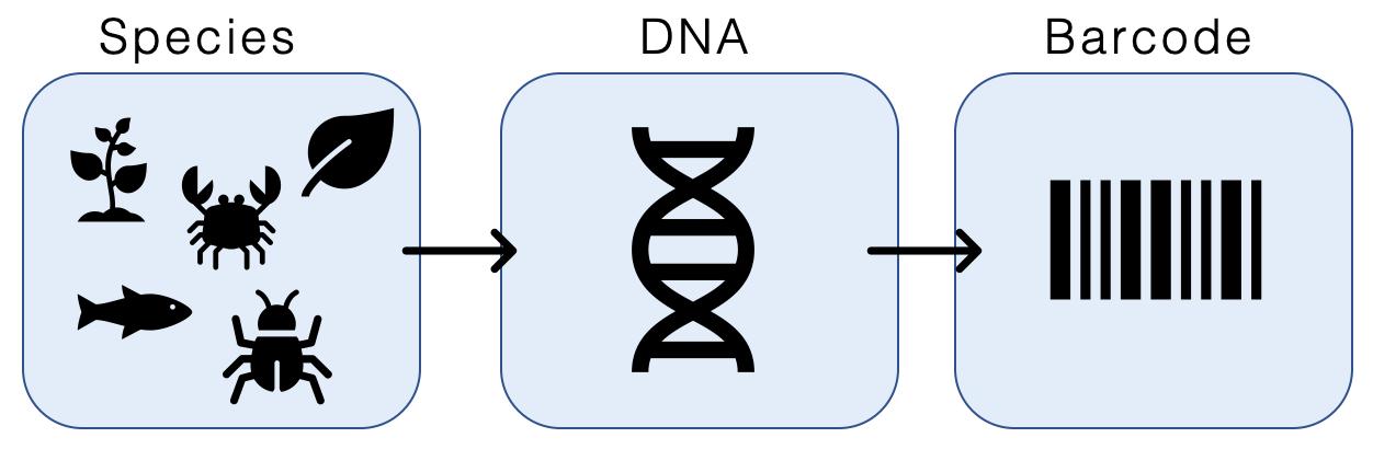 Levantamento ictiofaunístico através de métodos moleculares