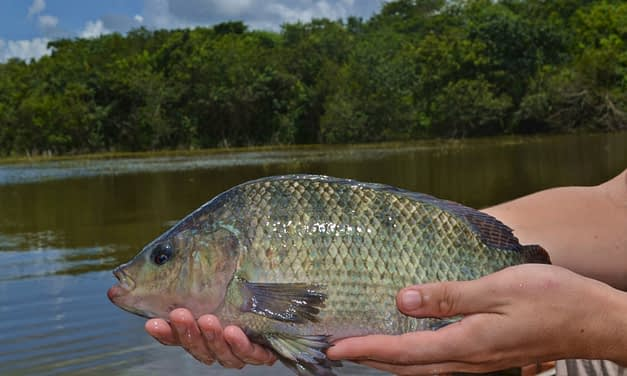 Projeto de piscicultura na comunidade indígena de Mangueirinha, Paraná.