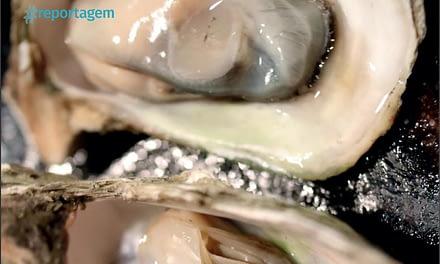 Estudo do GIA desenvolve tecnologia para aumentar a segurança dos consumidores de ostras