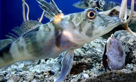 Adaptações de peixes a variações de temperatura