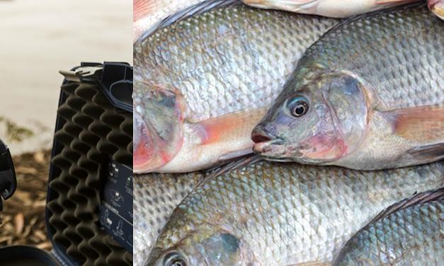 Verticalização da cadeia produtiva de peixes