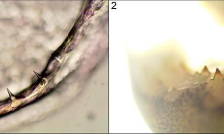 Desenvolvimento da cavidade oral de peixes