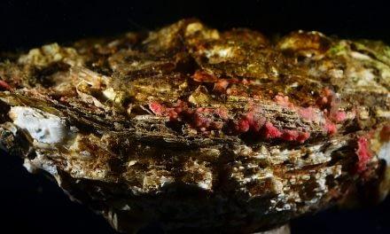 Metagenômica de ostras cultivadas em ambientes estuarinos