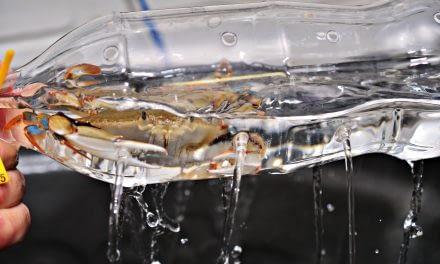 Produção de siri-mole: Cuidados com a qualidade da água