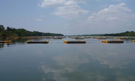 Caracterização ambiental e impactos da piscicultura nos reservatórios do Paranapanema