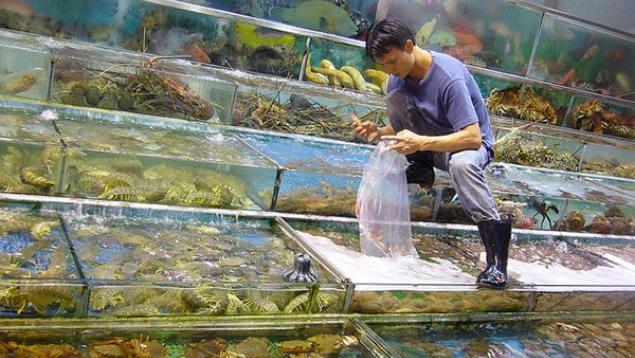 Maricultura na China (segunda parte)