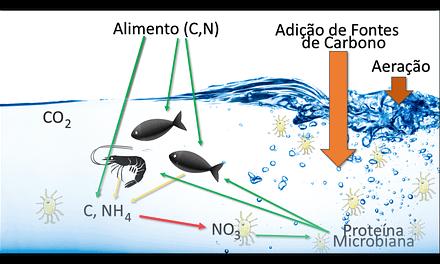 Sistemas de cultivo em meios heterotróficos (Bioflocos) – PARTE 2