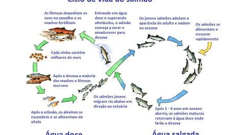 Aspectos da vida do salmão