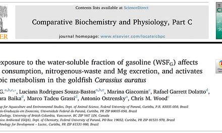 Efeitos fisiológicos da exposição de peixes à gasolina