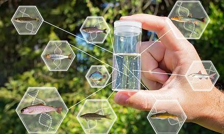 Monitoramento da biodiversidade de peixes no Canal da Piracema utilizando sequenciamento de DNA de segunda geração