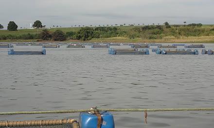 Uso de águas públicas para o desenvolvimento da aquicultura no Brasil