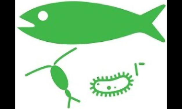 Bioflocos