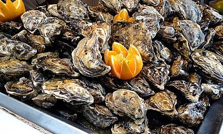Armazenamento de ostras para comercialização