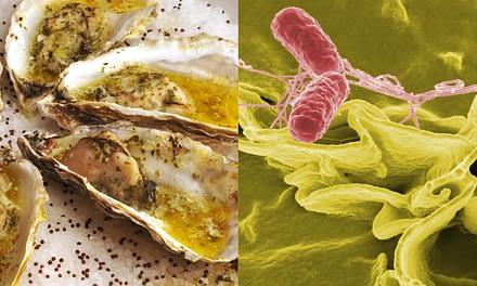 Segurança Alimentar: Contaminação de ostras por Salmonella sp.