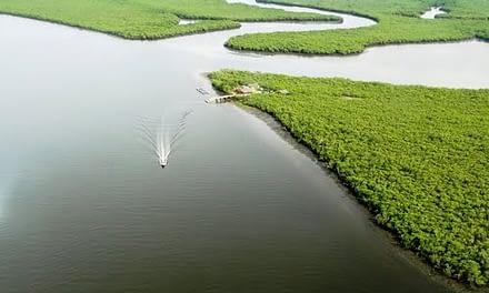 Utilização de sonar na estimativa da população de ostras em seu ambiente natural