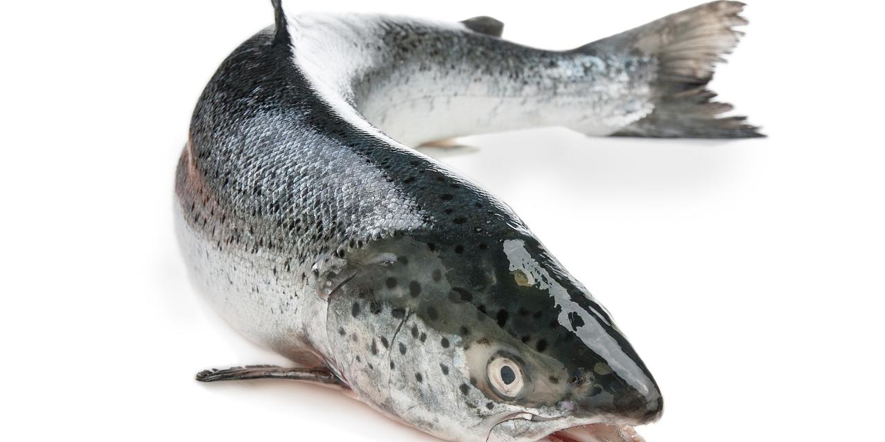 Estratégias para redução de infestações de piolho do mar (Lepeophtheirus salmonis) em cultivos de salmão