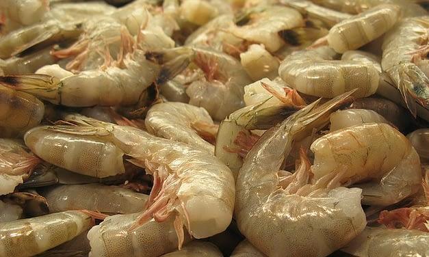 Problemas com a importação do camarão no Brasil