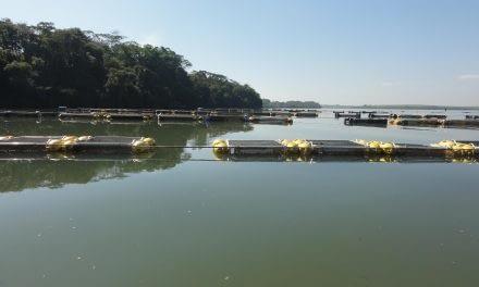 Uso de grandes reservatórios para a aquicultura