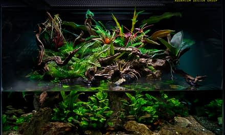 Extrativismo de peixes ornamentais