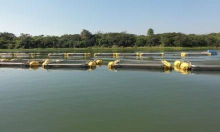 Estudos para a determinação da capacidade de suporte de cultivos de peixes em reservatórios.