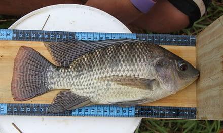 Novas tecnologias para estimativa de biomassa na piscicultura