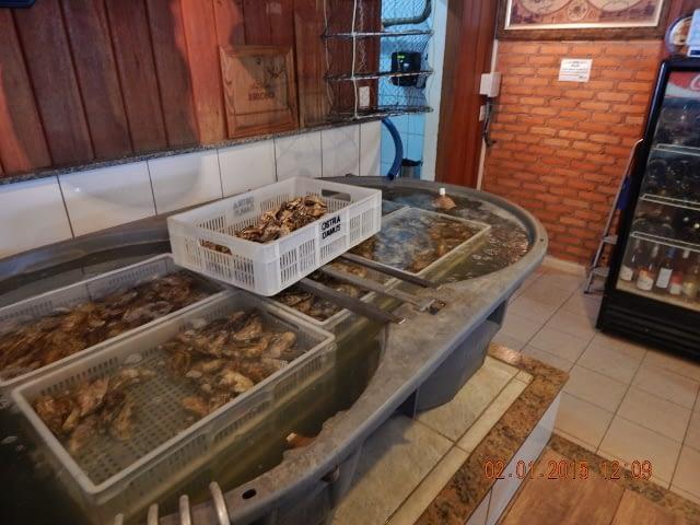 Segurança alimentar para consumidores de ostras